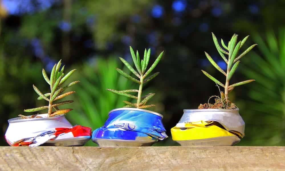 Pflanzen in der Dose